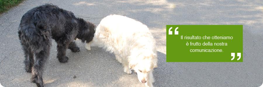 Code al vento segnali calmanti educazione for Educazione cane