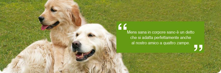 Code al vento stato di salute educazione for Educazione cane